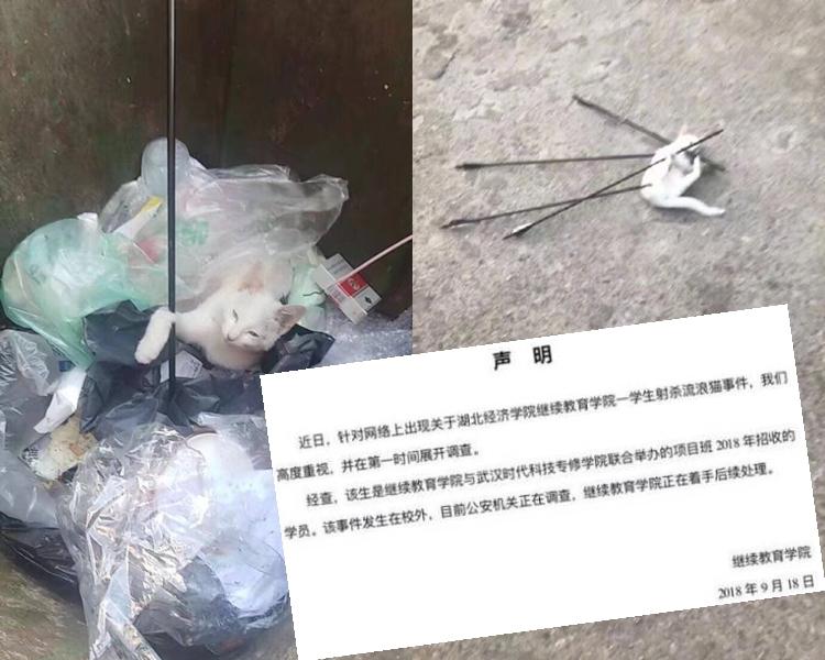 湖北武漢有一隻流浪貓身中4箭。網圖
