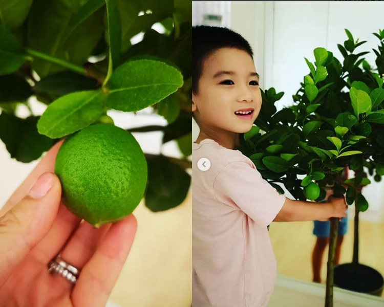 陳茵媺囝囝對檸檬樹愛不釋手。ig圖片
