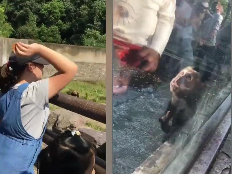 眾多遊客在欄杆上投擲食物餵狗熊,亦有遊客餵馬騮食辣條,小猴子辣得露出痛苦表情。(網圖)