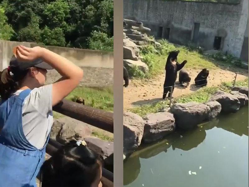 廣播循環播放著「禁止投食」的語音提示,可是眾多遊客卻置之不理,扒在欄杆上爭先給狗熊投餵食物。(網圖)