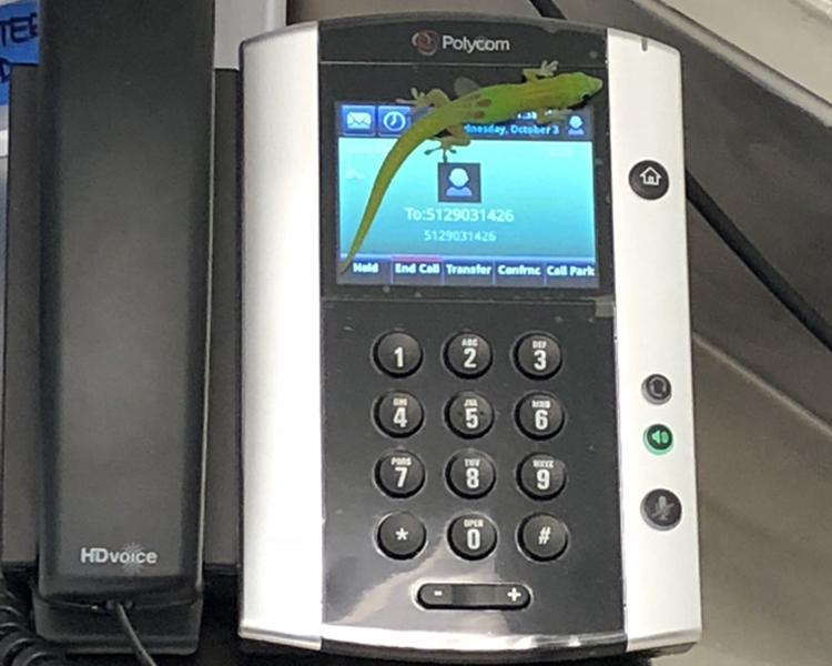 小壁虎趴在了醫院專線電話的觸控式螢幕上。網圖
