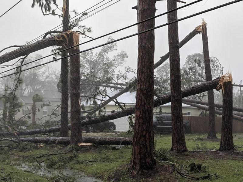 迈克尔的暴雨造成佛罗里达州多处水浸,大量树木及架空电缆被强风摧毁,1名男子被倒塌的大树压死。