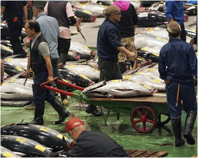 丰洲市场今日起开放予一般民众进场参观。
