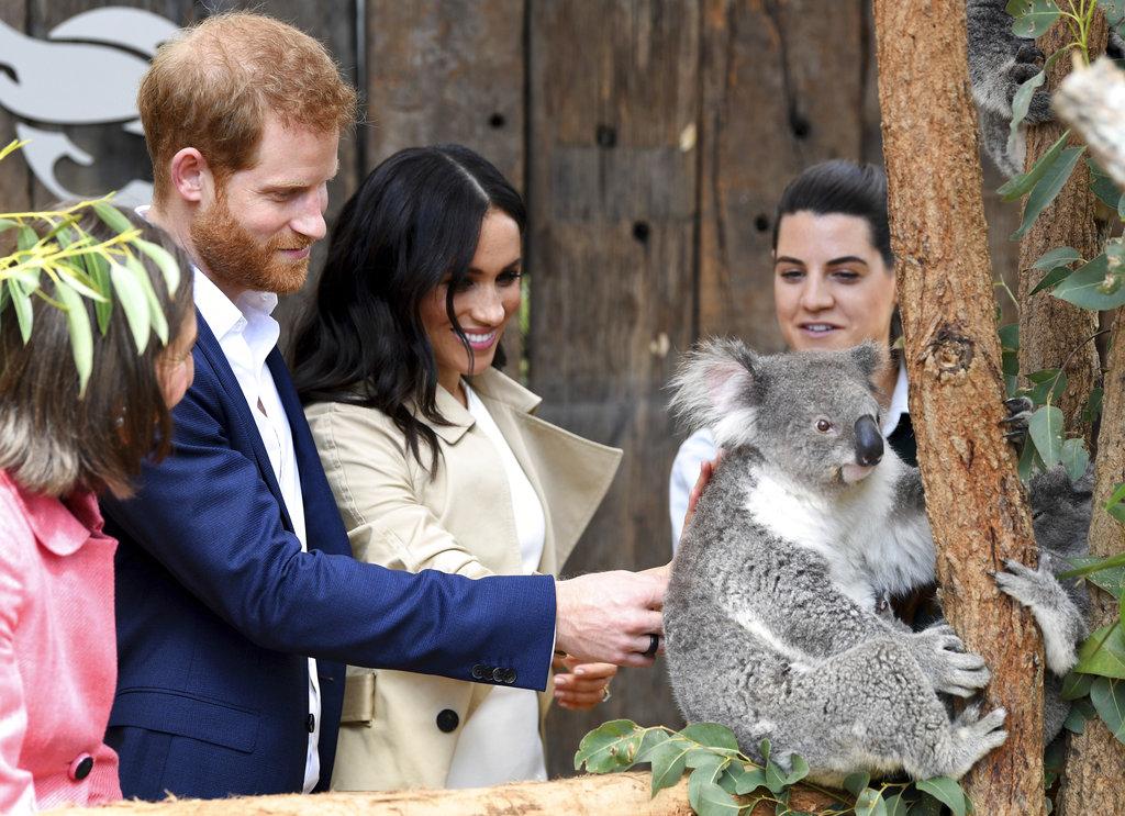 雪梨的动物园内一对树熊以哈里和梅根命名。