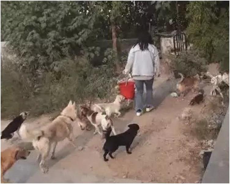 王蕾一放工就趕回家餵飼30多條狗。