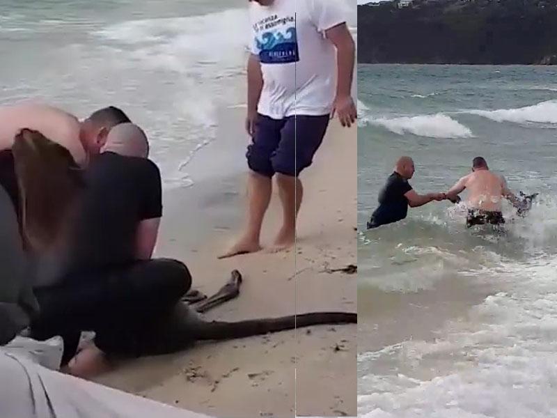 澳洲有袋鼠遇溺,需由警员拖回上岸抢救。(网图)