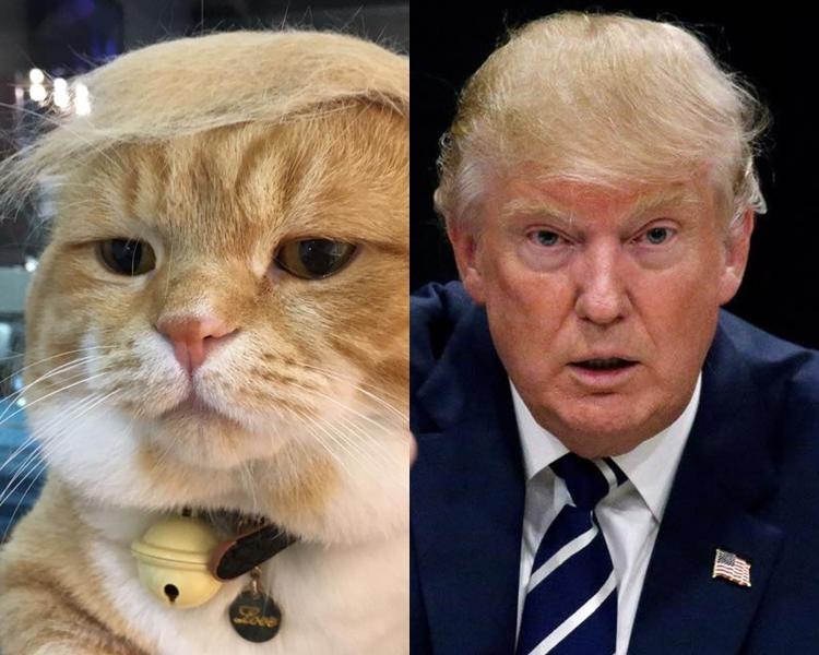 台灣網民Aaron Wang將貓咪扮成特朗普。
