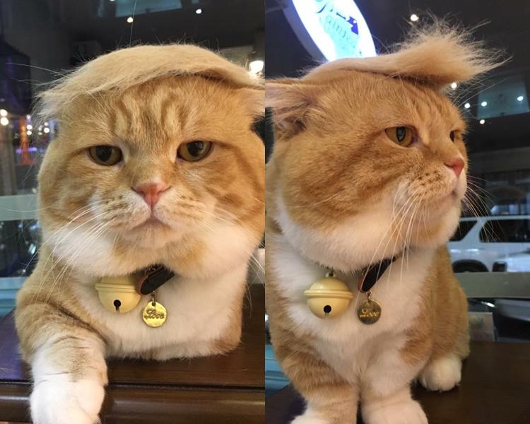 貓咪的眼神十分無奈。