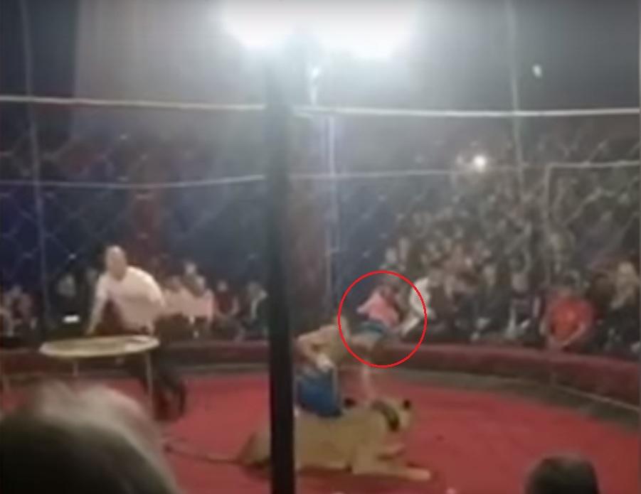 马戏团表演中,一只母狮突然冲向4岁女童(红圈),并咬伤她。影片截图