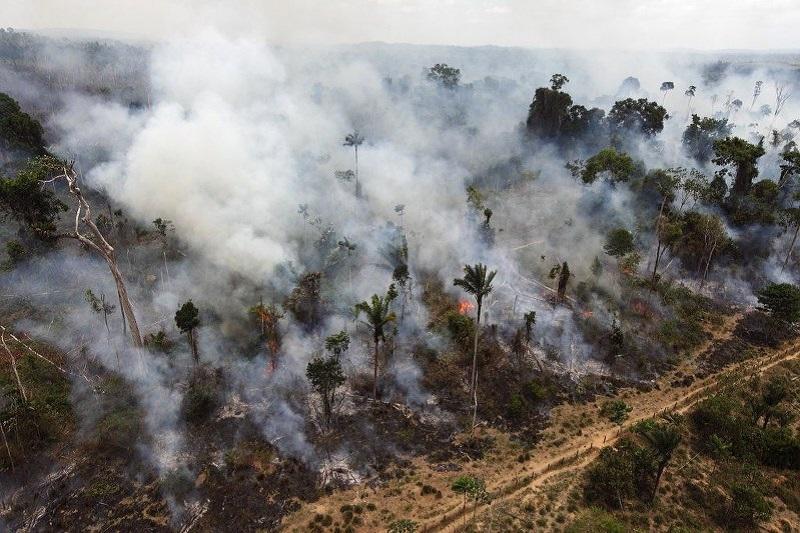 全球最大的雨林区、巴西亚马逊森林50年来消失了20%.资料图片