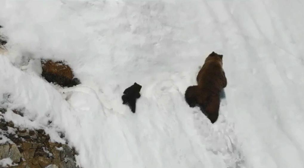 小熊偕熊媽媽爬雪山。網上圖片