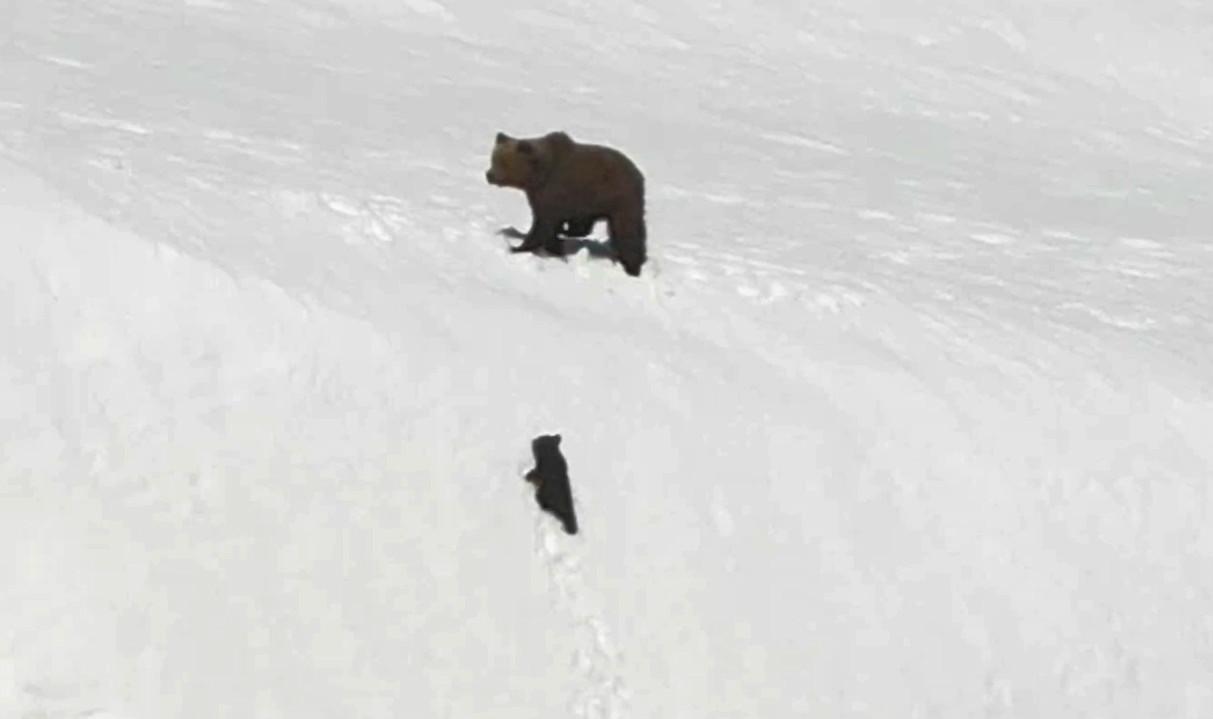 小熊成功登頂。網上圖片