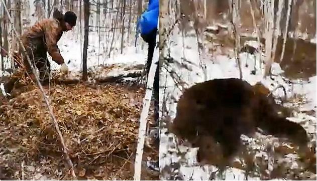 羅迪安被發現被肢解,遺髒被樹葉淹埋;襲人棕熊被救護人員槍殺。(網圖)
