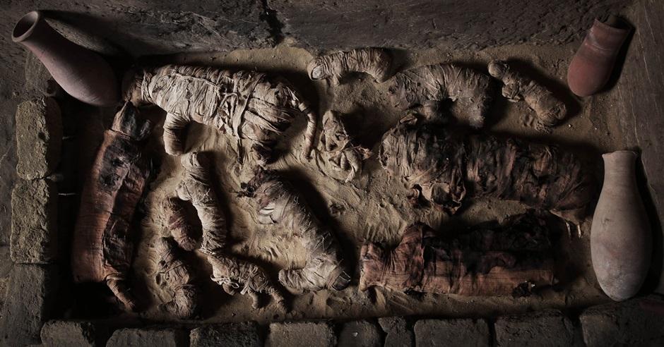 埃及古墓发现木乃伊猫。
