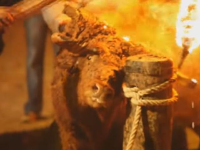 村民点燃火把。 PETA影片截图