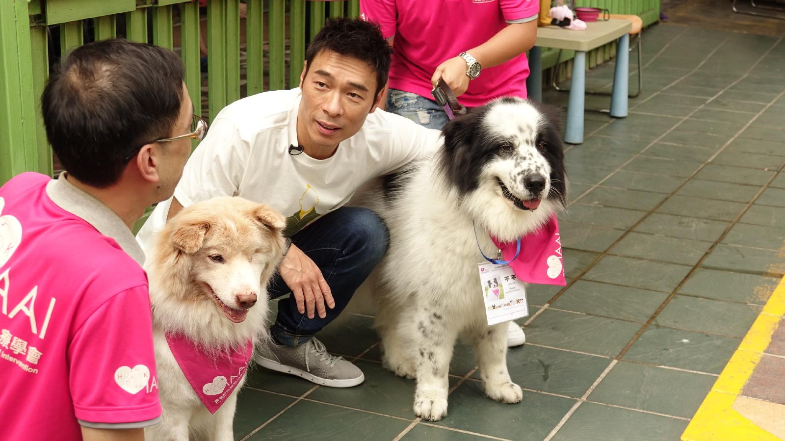 3隻受過專業訓練的治療犬,包括擁有不少粉絲的「淡定哥」、還有「不不」和「Tiger」。