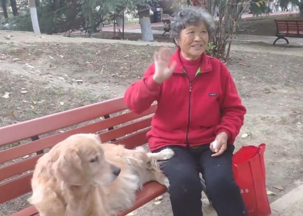 主人離世半年,愛犬不知情每日公園霸位。網上圖片