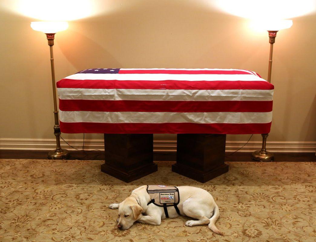 拉布拉多服務犬薩利(Sully),在覆蓋了美國國旗的老布殊靈柩前面伏下。網圖