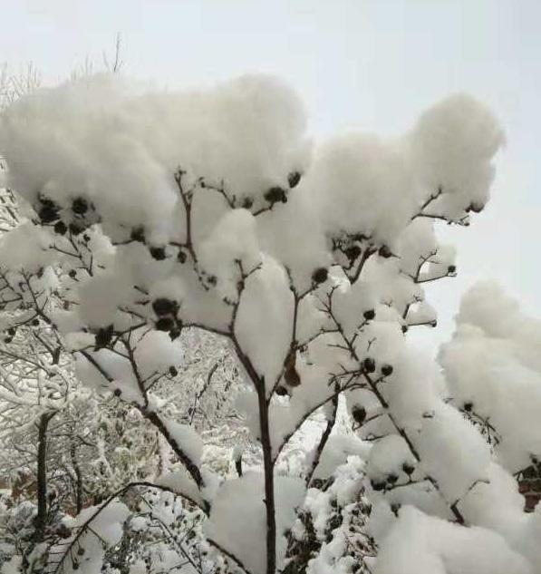 華北地區初雪。網上圖片