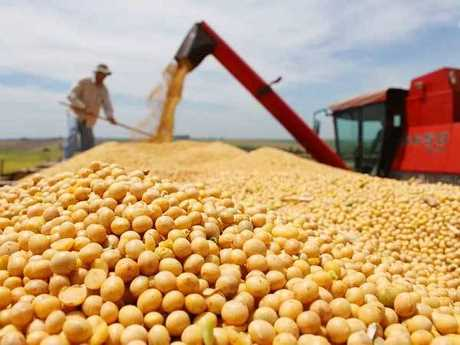 两家美国贸易商表示,中国数家国营企业共採购最少价值1.8亿美元的大豆。网上图片