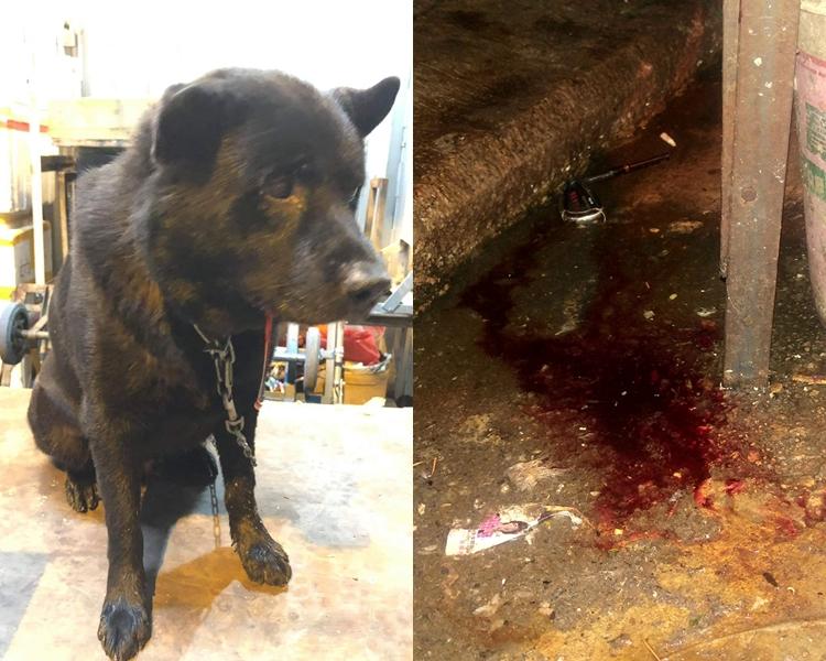 唐狗被無辜打到重傷,口吐血(左);現場遺下一地鮮血(右)。  我長大於大角咀fb/網民Sum Chow圖