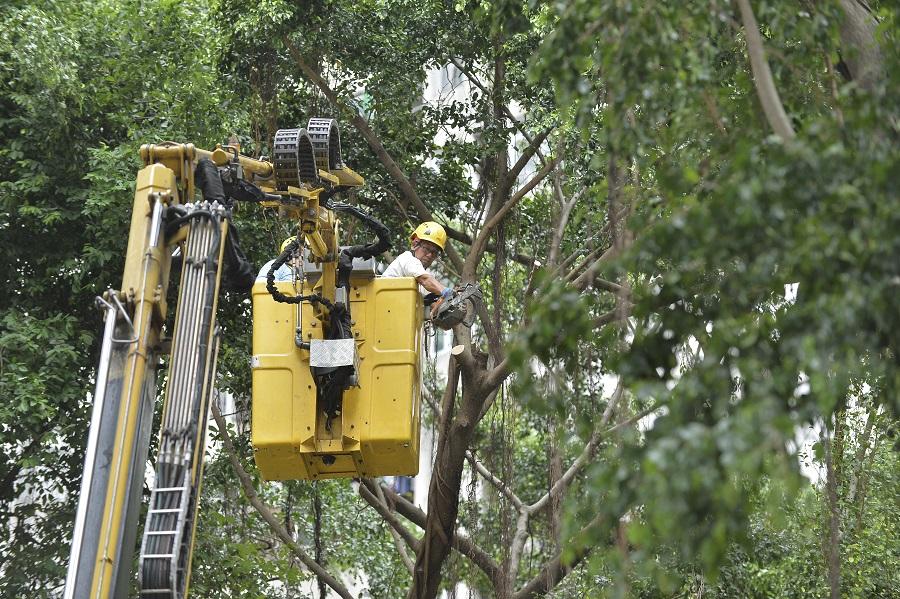「山竹」襲港後,本港錄得至少1.5萬宗塌樹報告。資料圖片