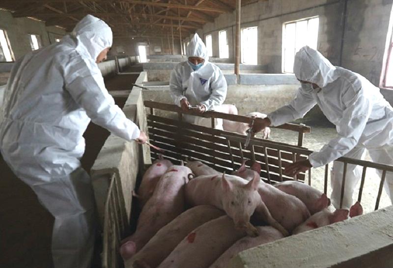 广东是第23个发生疫情的省份。网上图片