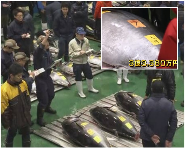 重达278公斤的蓝鳍吞拿鱼以天价成交。NHK截图
