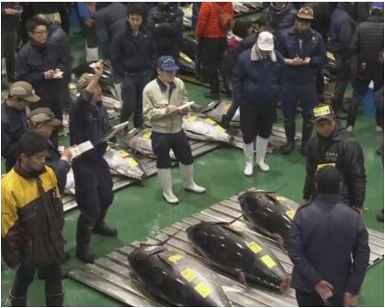 丰州市场今日举行首场新年拍卖会。NHK截图
