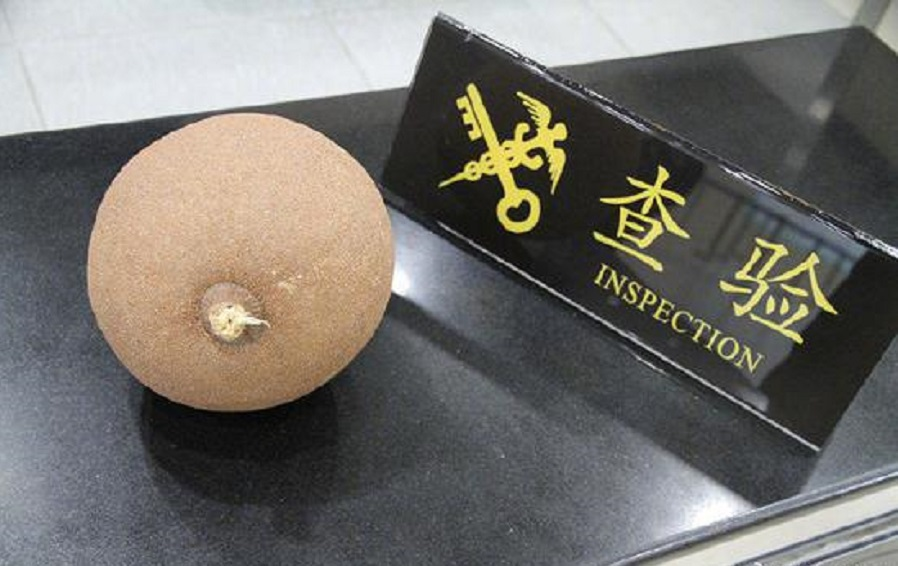 拱北海关截获了一颗名为「砲弹果」的球状果实。网上图片