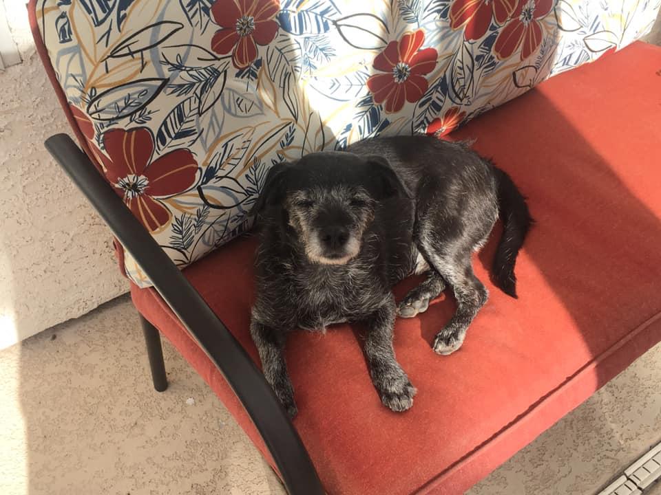 黑狗(Black/92)。fb圖片