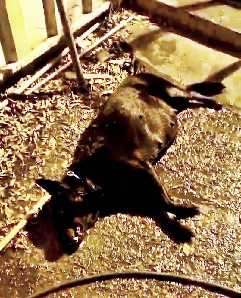 流浮山有狗隻疑遭毒殺。鍾先生提供