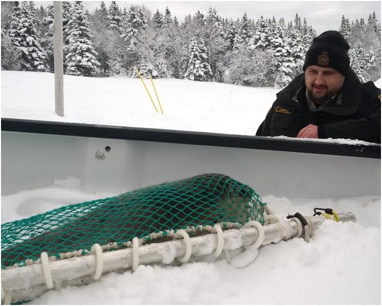 加拿大漁業及海洋部正部署人員前往救助海豹。圖:twitter