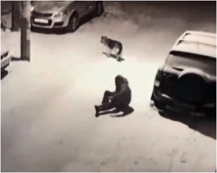 狗狗逃出魔腳後還一步一回頭看男子。網圖