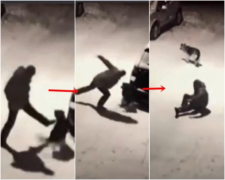男子無端突起飛腳向狗狗踢去,卻自己失重心跌倒。網圖