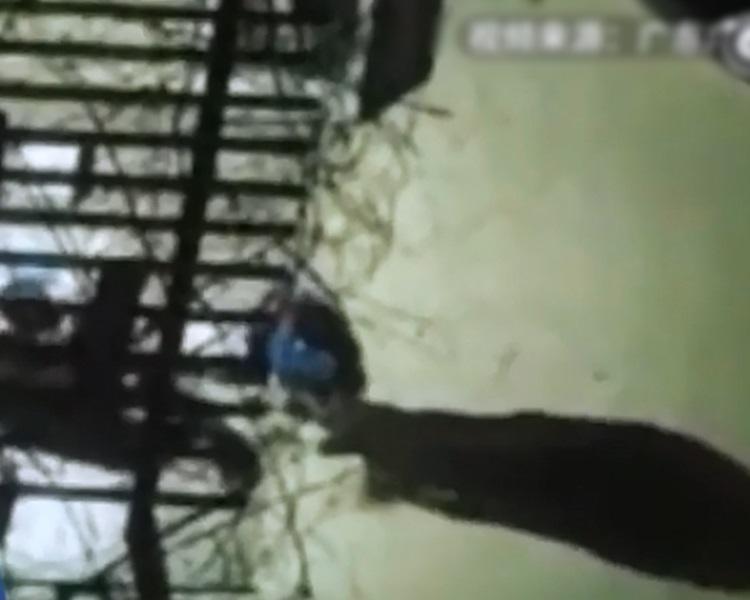 男童在15日被父亲剃光头,再绑在树上,用皮带不断抽打。澎湃新闻片段截图。