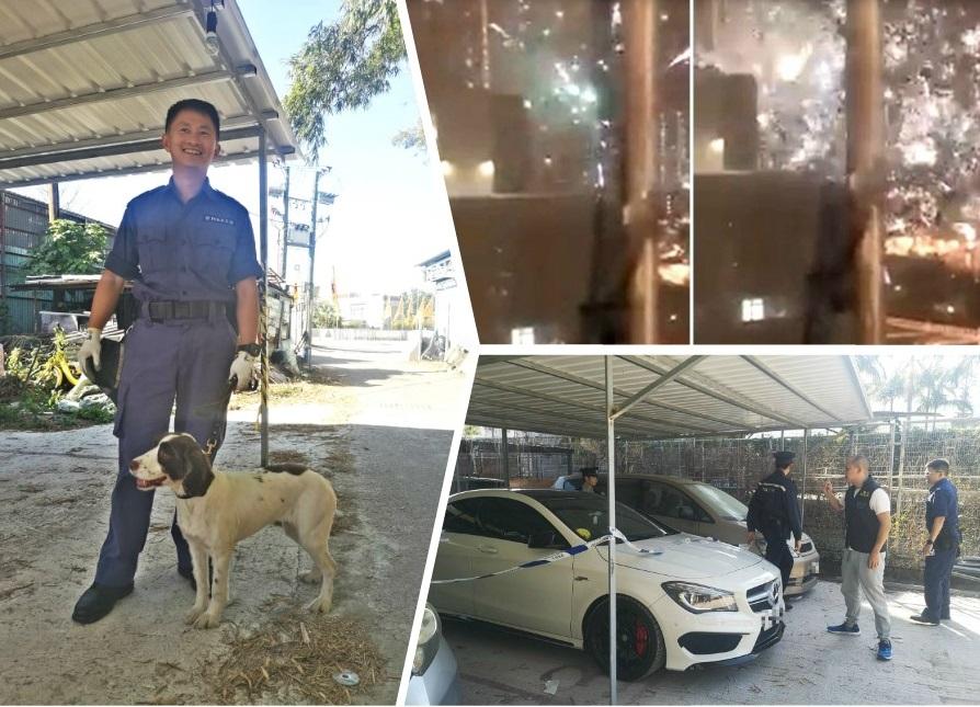 搜索犬屬於史賓格 狗女、2歲。