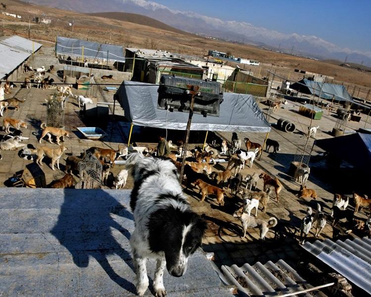 狗在當地被視為不潔動物。AP