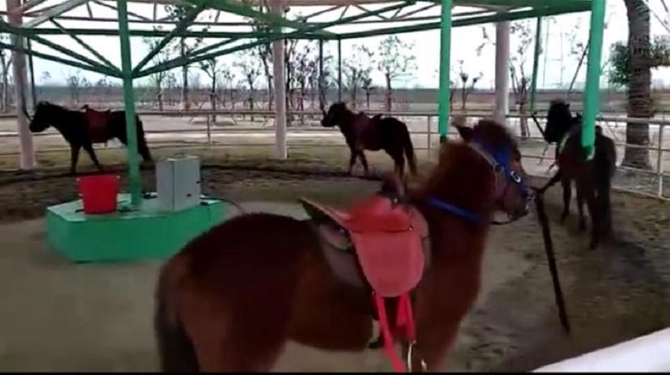 江苏动物园推出旋转活马。网上图片