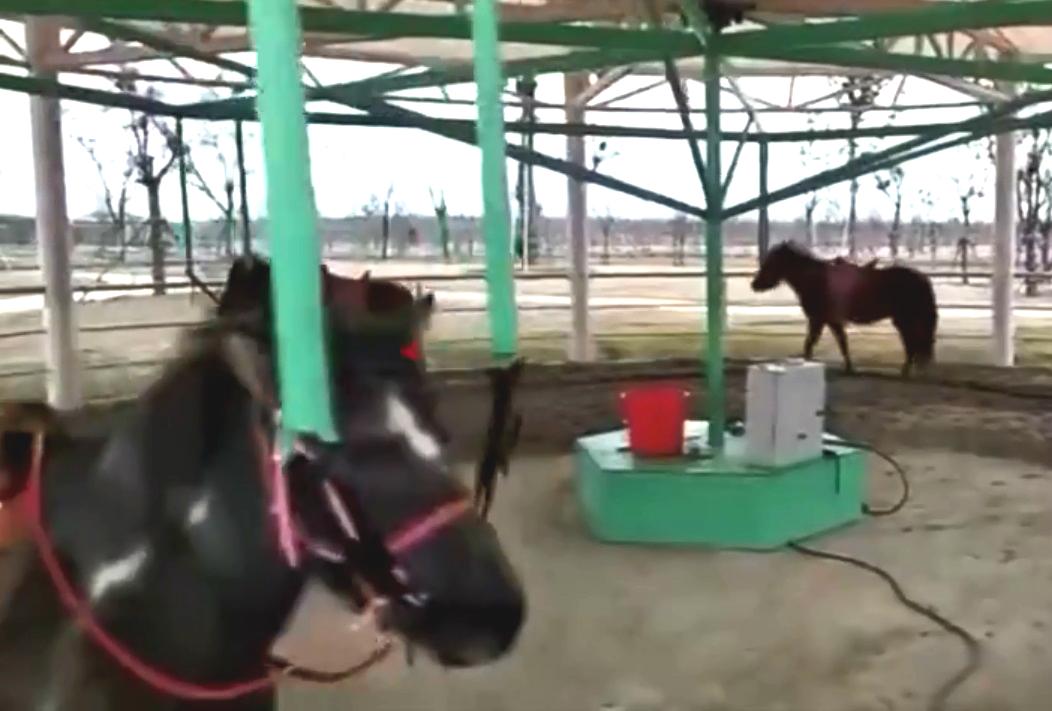 江蘇動物園推出旋轉活馬。網上圖片