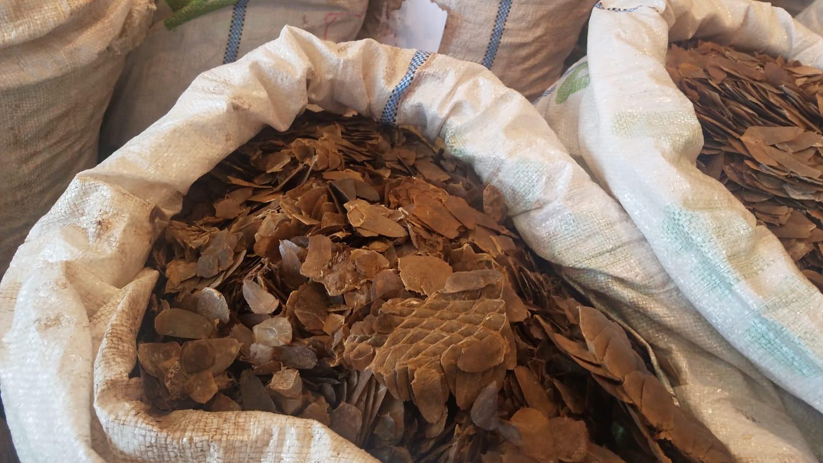 海關起出約8300公斤懷疑穿山甲鱗片和2100公斤懷疑象牙,估計市值約6200萬元。