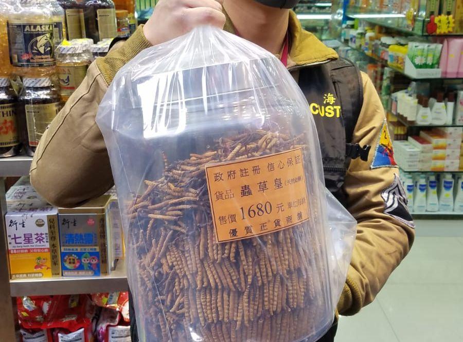 海關檢走一樽蟲草、榜及磨粉機作證物。