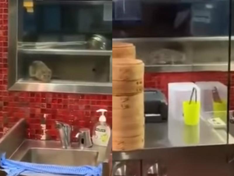 雪梨鼎泰丰厨房惊见大老鼠乱窜。网上图片