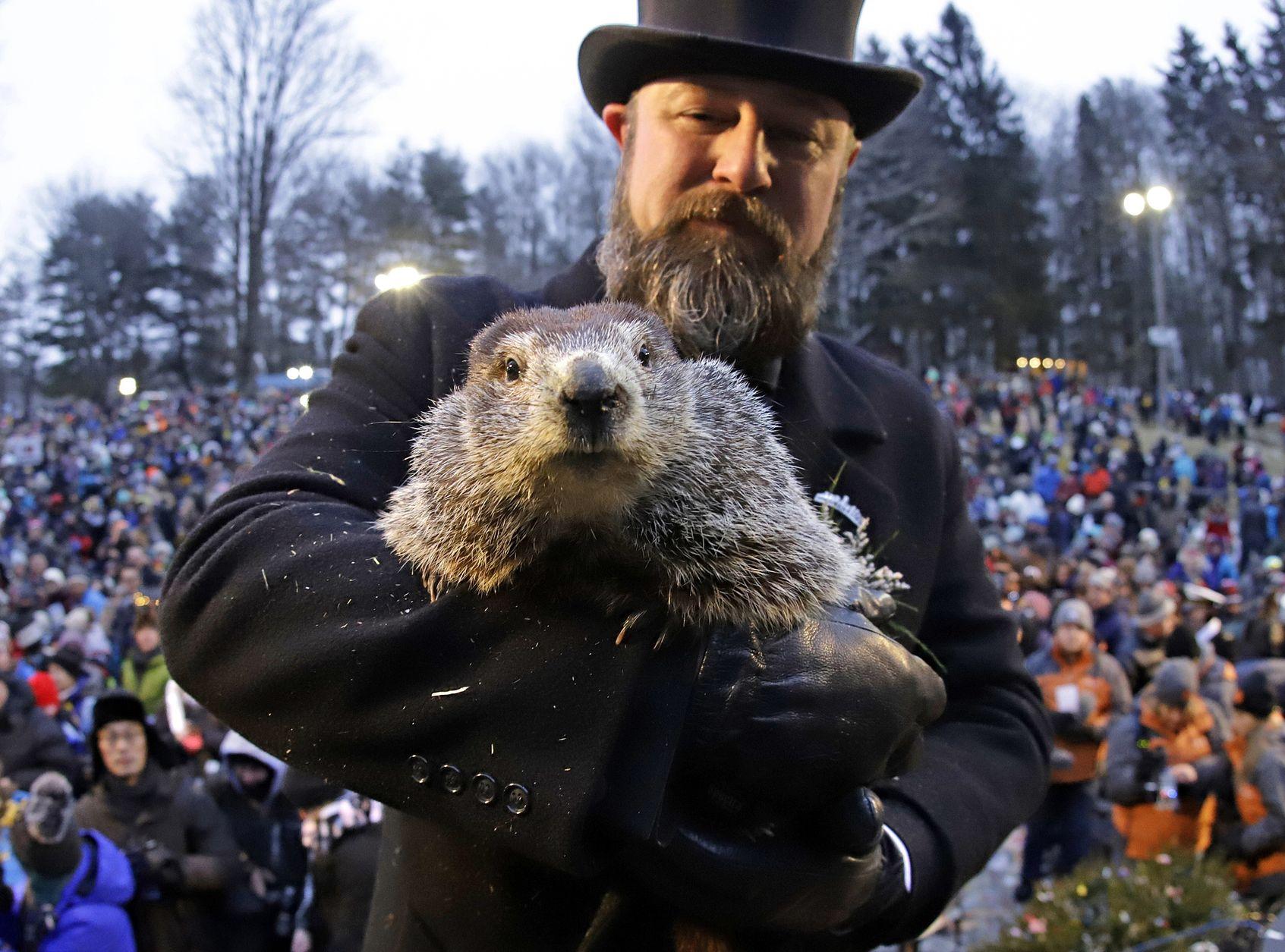 在美國每年的「土撥鼠日」,土撥鼠Phil亦會預測春天是否即將到臨。AP