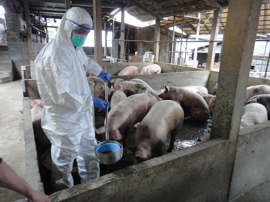 日本于春节期间加强检查游客行李以严防非洲猪瘟。资料图片
