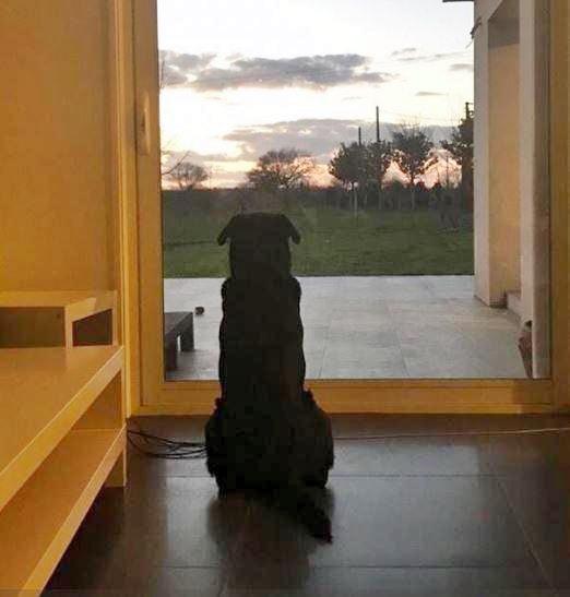 Nala呆坐在住所門前照片,妹妹心痛留言:「牠仍在等你回家」。網圖