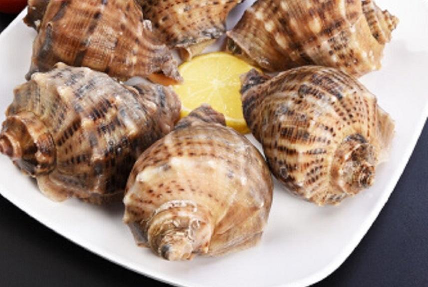 海螺。網上圖片