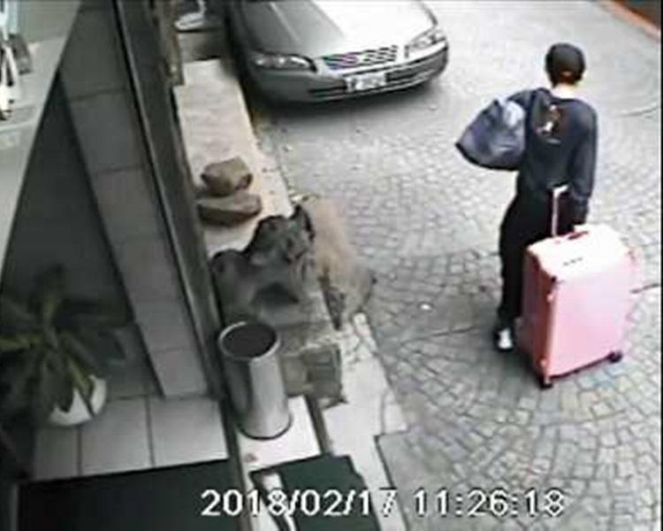 男疑犯陳同佳懷疑用行李箱藏屍。網圖