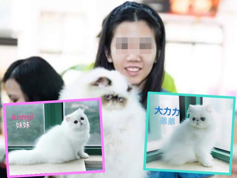 港女赴台偷兩隻逾2.5萬港元波斯貓。Kay Chu圖