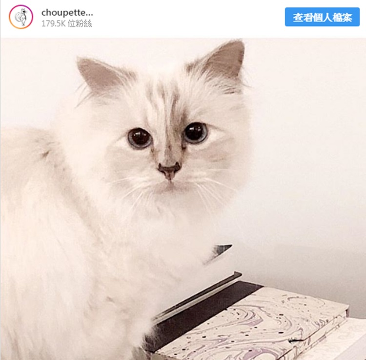 Choupette有自己的专属IG,粉丝近18万人。IG图片